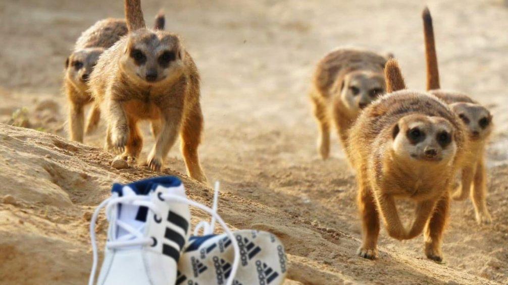 Zweite Runde beim 1. NRW Zoo Run